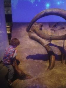 Swinging off the tusk